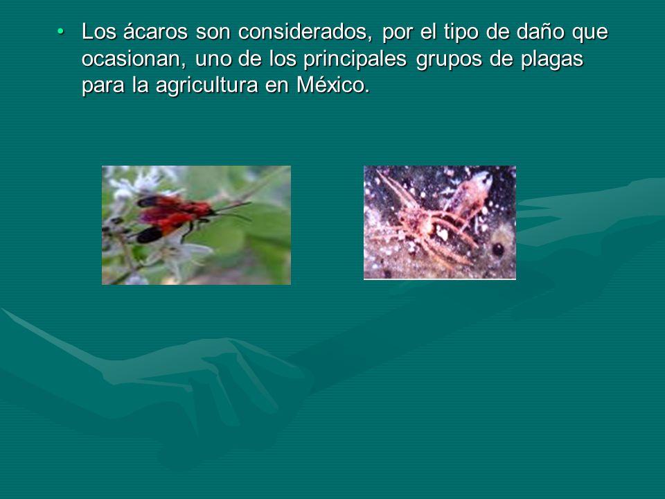 Los ácaros son considerados, por el tipo de daño que ocasionan, uno de los principales grupos de plagas para la agricultura en México.Los ácaros son c