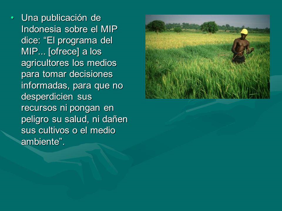 Capacitación en el campo Para impartir el MIP con eficacia a los agricultores se creó una técnica innovadora de capacitación participativa que se lleva a cabo en el campo: la Escuela Agrícola en el Campo.