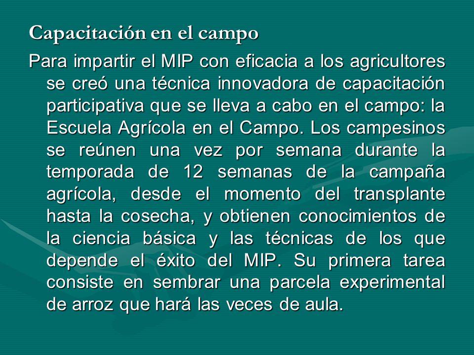 Capacitación en el campo Para impartir el MIP con eficacia a los agricultores se creó una técnica innovadora de capacitación participativa que se llev