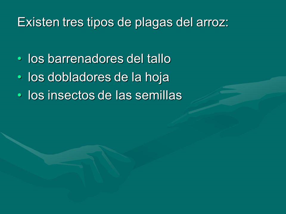 Los ácaros son considerados, por el tipo de daño que ocasionan, uno de los principales grupos de plagas para la agricultura en México.Los ácaros son considerados, por el tipo de daño que ocasionan, uno de los principales grupos de plagas para la agricultura en México.