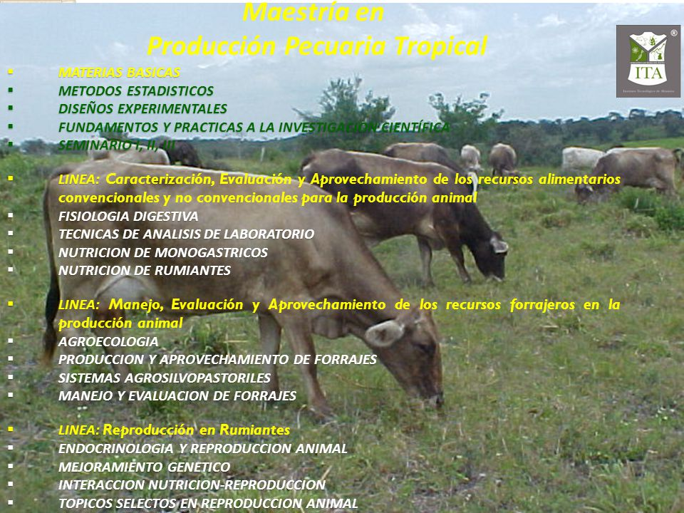 Maestría en Producción Pecuaria Tropical MATERIAS BASICAS MATERIAS BASICAS METODOS ESTADISTICOS METODOS ESTADISTICOS DISEÑOS EXPERIMENTALES DISEÑOS EXPERIMENTALES FUNDAMENTOS Y PRACTICAS A LA INVESTIGACION CIENTÍFICA FUNDAMENTOS Y PRACTICAS A LA INVESTIGACION CIENTÍFICA SEMINARIO I, II, III SEMINARIO I, II, III LINEA: LINEA: Caracterización, Evaluación y Aprovechamiento de los recursos alimentarios convencionales y no convencionales para la producción animal FISIOLOGIA DIGESTIVA FISIOLOGIA DIGESTIVA TECNICAS DE ANALISIS DE LABORATORIO TECNICAS DE ANALISIS DE LABORATORIO NUTRICION DE MONOGASTRICOS NUTRICION DE MONOGASTRICOS NUTRICION DE RUMIANTES NUTRICION DE RUMIANTES LINEA: LINEA: Manejo, Evaluación y Aprovechamiento de los recursos forrajeros en la producción animal AGROECOLOGIA AGROECOLOGIA PRODUCCION Y APROVECHAMIENTO DE FORRAJES PRODUCCION Y APROVECHAMIENTO DE FORRAJES SISTEMAS AGROSILVOPASTORILES SISTEMAS AGROSILVOPASTORILES MANEJO Y EVALUACION DE FORRAJES MANEJO Y EVALUACION DE FORRAJES LINEA: LINEA: Reproducción en Rumiantes ENDOCRINOLOGIA Y REPRODUCCION ANIMAL ENDOCRINOLOGIA Y REPRODUCCION ANIMAL MEJORAMIENTO GENETICO MEJORAMIENTO GENETICO INTERACCION NUTRICION-REPRODUCCION INTERACCION NUTRICION-REPRODUCCION TOPICOS SELECTOS EN REPRODUCCION ANIMAL TOPICOS SELECTOS EN REPRODUCCION ANIMAL
