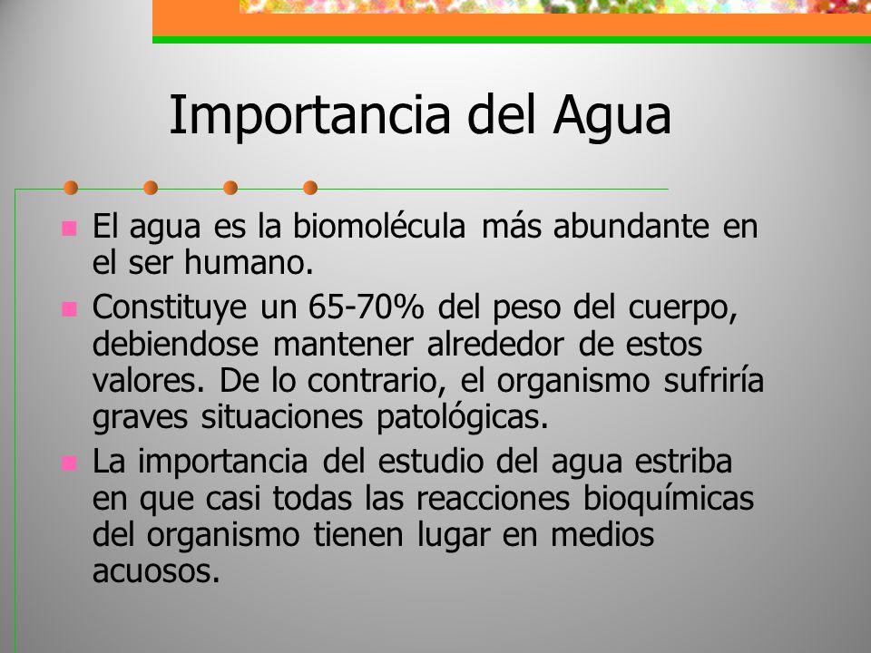 Importancia del Agua El agua es la biomolécula más abundante en el ser humano. Constituye un 65-70% del peso del cuerpo, debiendose mantener alrededor