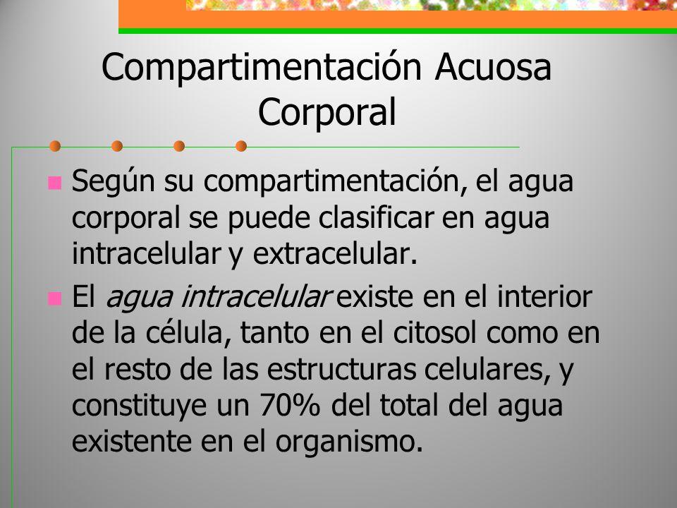 Compartimentación Acuosa Corporal Según su compartimentación, el agua corporal se puede clasificar en agua intracelular y extracelular. El agua intrac