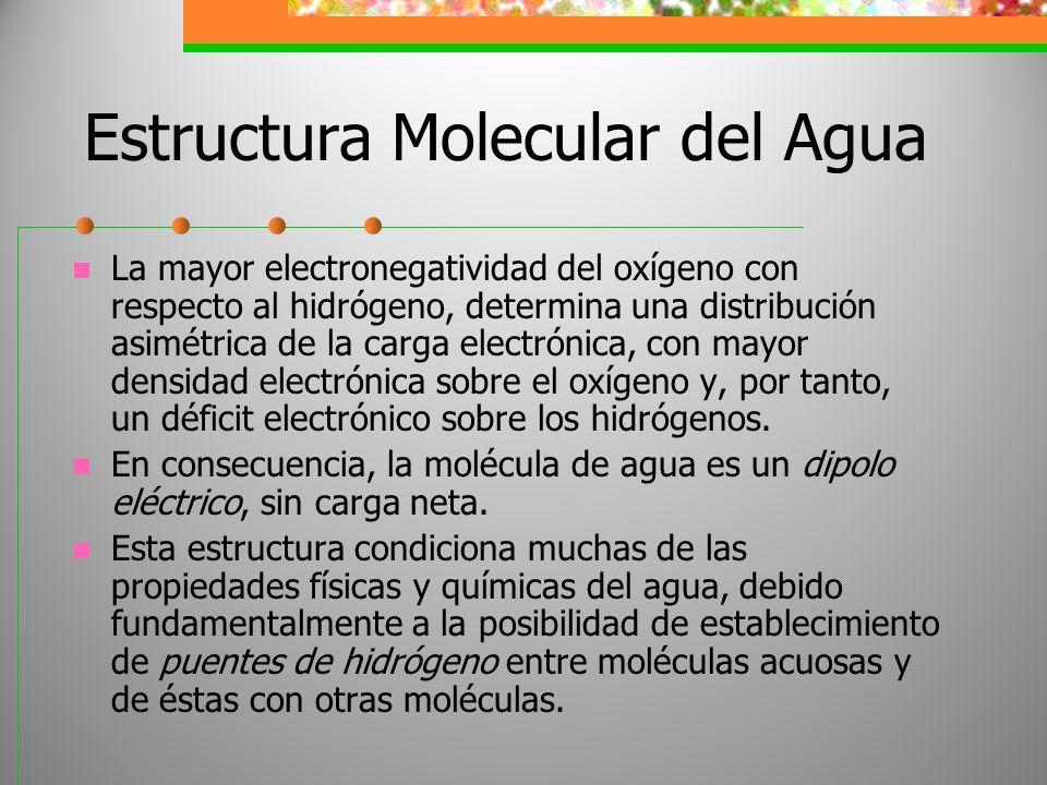 Estructura Molecular del Agua La mayor electronegatividad del oxígeno con respecto al hidrógeno, determina una distribución asimétrica de la carga ele