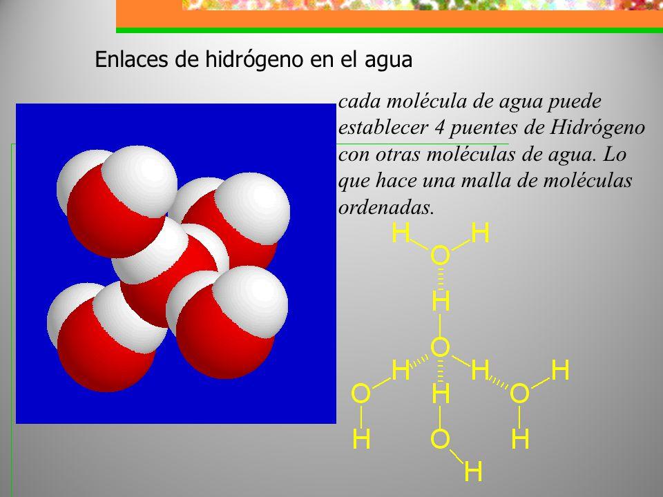 Enlaces de hidrógeno en el agua cada molécula de agua puede establecer 4 puentes de Hidrógeno con otras moléculas de agua. Lo que hace una malla de mo