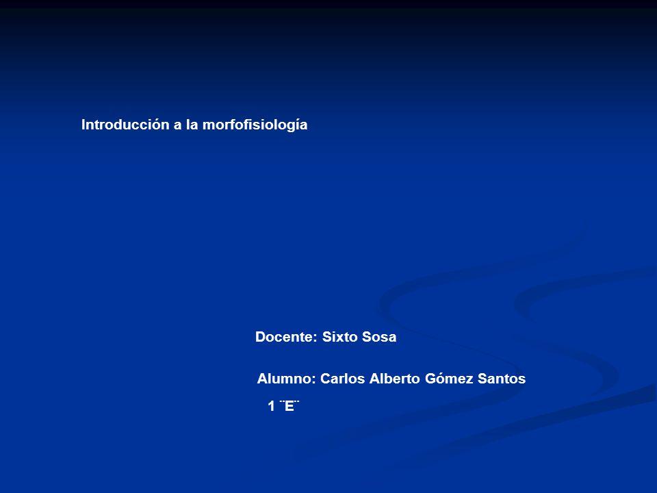Introducción a la morfofisiología Alumno: Carlos Alberto Gómez Santos 1 ¨E¨ Docente: Sixto Sosa