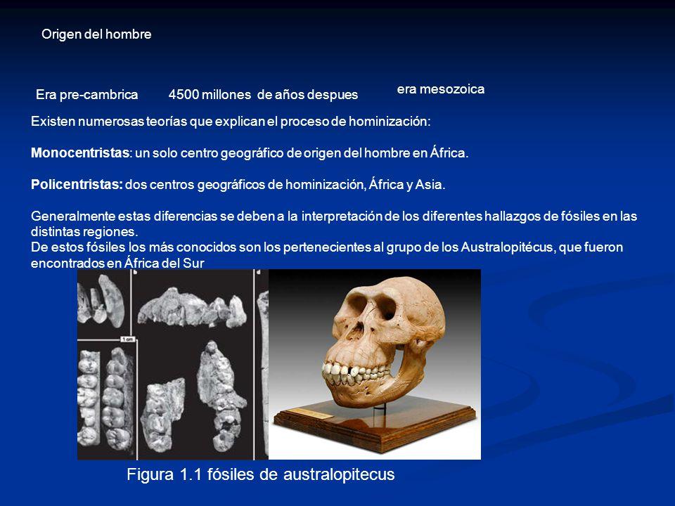 Origen del hombre Era pre-cambrica4500 millones de años despues era mesozoica Existen numerosas teorías que explican el proceso de hominización: Monocentristas: un solo centro geográfico de origen del hombre en África.