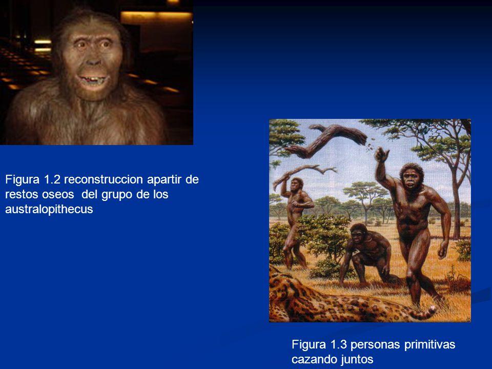 Figura 1.2 reconstruccion apartir de restos oseos del grupo de los australopithecus Figura 1.3 personas primitivas cazando juntos
