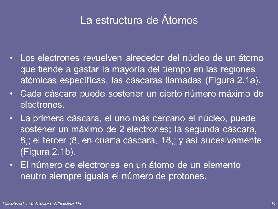 Principles of Human Anatomy and Physiology, 11e10 La estructura de Átomos Los electrones revuelven alrededor del núcleo de un átomo que tiende a gastar la mayoría del tiempo en las regiones atómicas específicas, las cáscaras llamadas (Figura 2.1a).