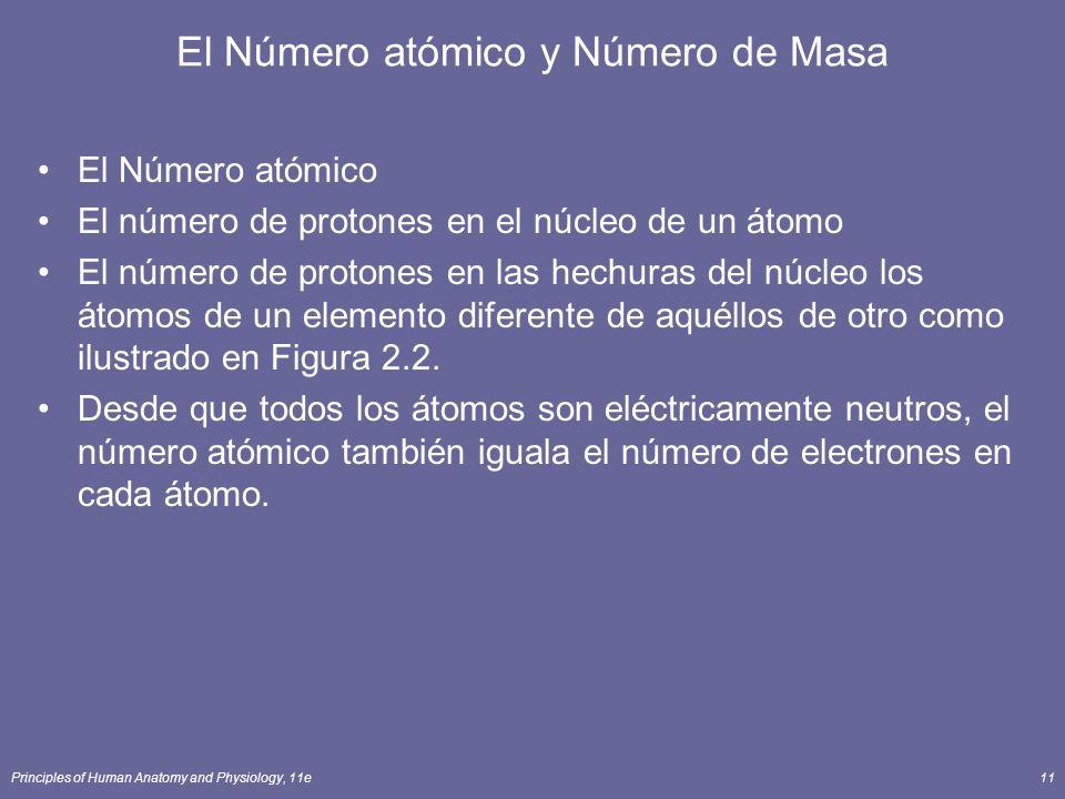 Principles of Human Anatomy and Physiology, 11e11 El Número atómico y Número de Masa El Número atómico El número de protones en el núcleo de un átomo El número de protones en las hechuras del núcleo los átomos de un elemento diferente de aquéllos de otro como ilustrado en Figura 2.2.