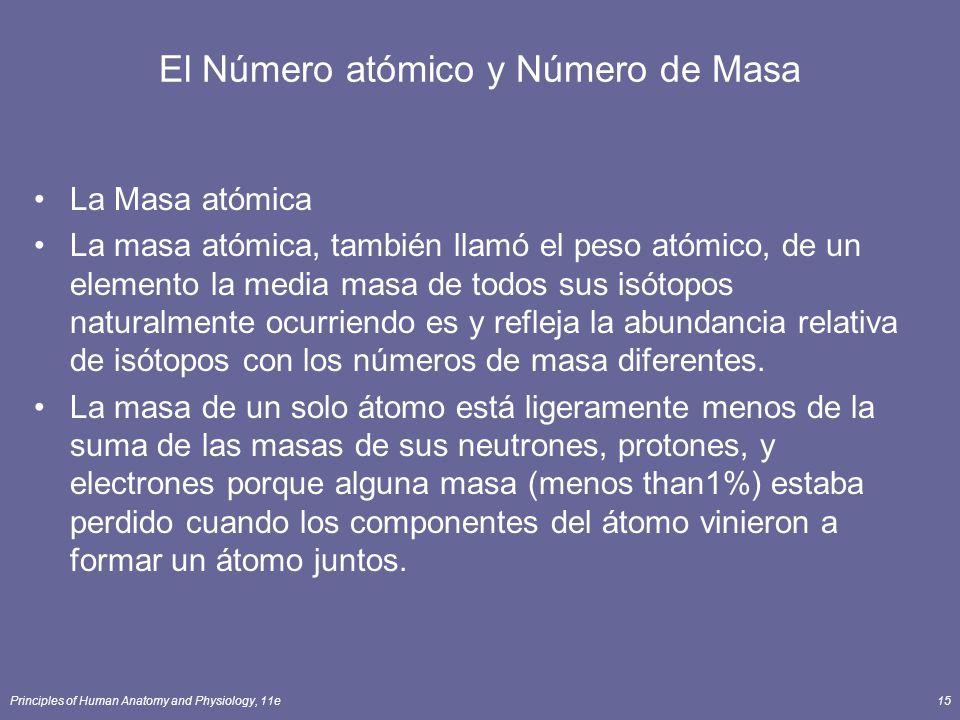 Principles of Human Anatomy and Physiology, 11e15 El Número atómico y Número de Masa La Masa atómica La masa atómica, también llamó el peso atómico, de un elemento la media masa de todos sus isótopos naturalmente ocurriendo es y refleja la abundancia relativa de isótopos con los números de masa diferentes.