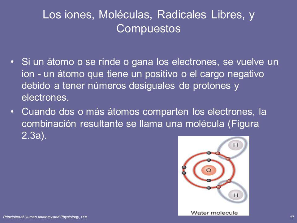 Principles of Human Anatomy and Physiology, 11e17 Los iones, Moléculas, Radicales Libres, y Compuestos Si un átomo o se rinde o gana los electrones, se vuelve un ion - un átomo que tiene un positivo o el cargo negativo debido a tener números desiguales de protones y electrones.