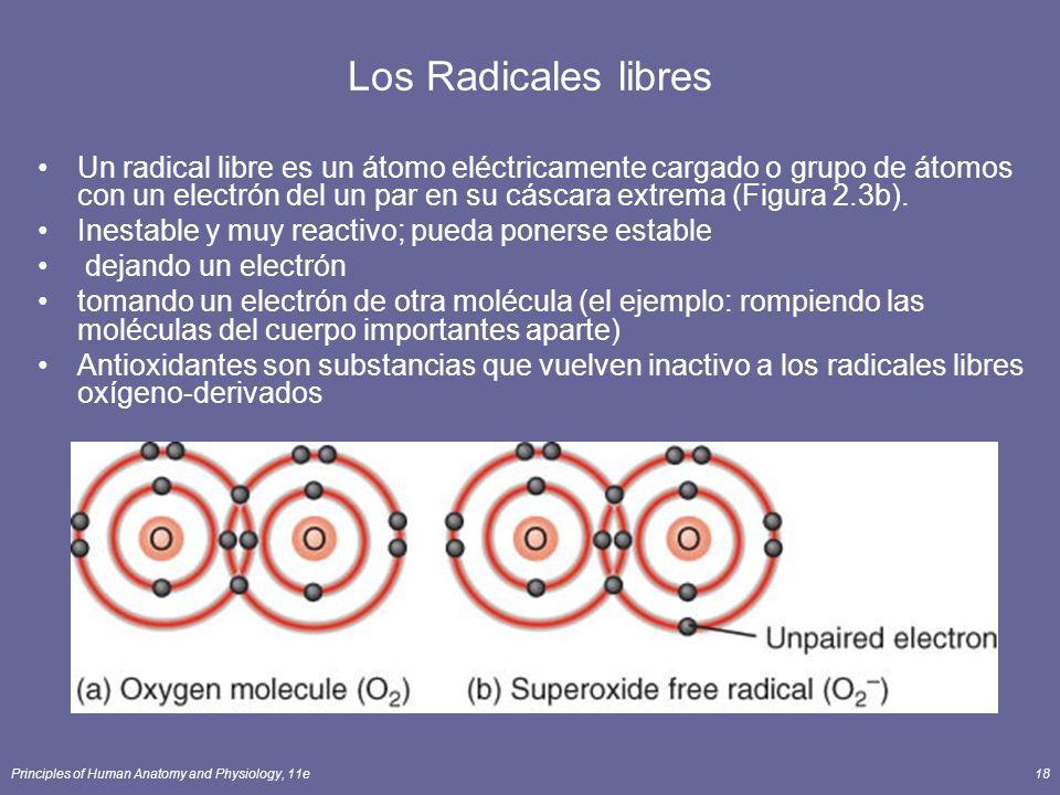 Principles of Human Anatomy and Physiology, 11e18 Los Radicales libres Un radical libre es un átomo eléctricamente cargado o grupo de átomos con un electrón del un par en su cáscara extrema (Figura 2.3b).