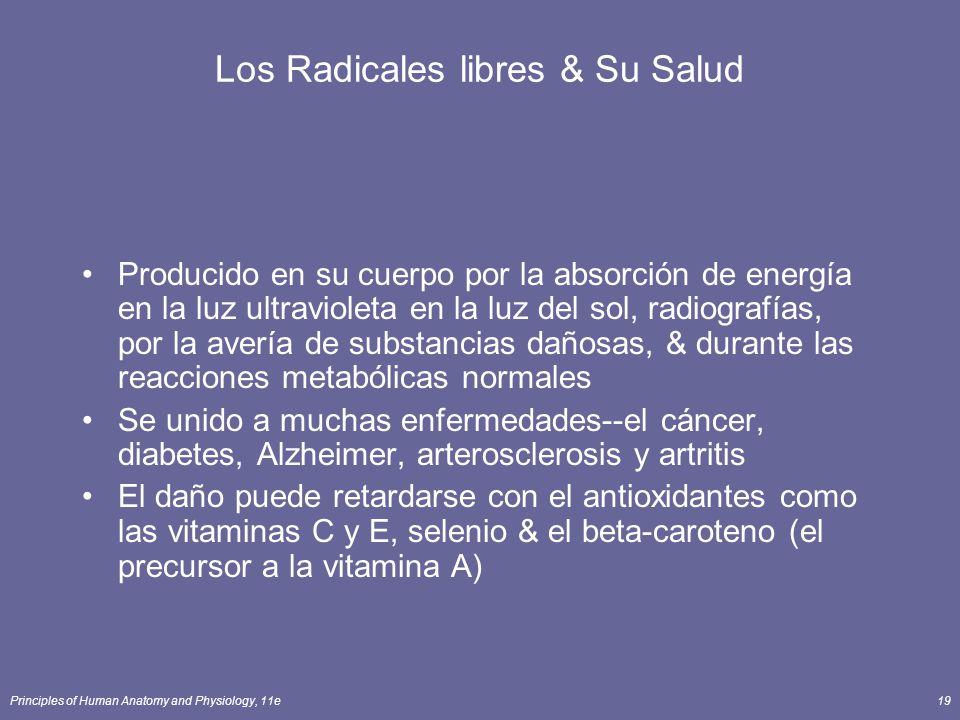 Principles of Human Anatomy and Physiology, 11e19 Los Radicales libres & Su Salud Producido en su cuerpo por la absorción de energía en la luz ultravioleta en la luz del sol, radiografías, por la avería de substancias dañosas, & durante las reacciones metabólicas normales Se unido a muchas enfermedades--el cáncer, diabetes, Alzheimer, arterosclerosis y artritis El daño puede retardarse con el antioxidantes como las vitaminas C y E, selenio & el beta-caroteno (el precursor a la vitamina A)