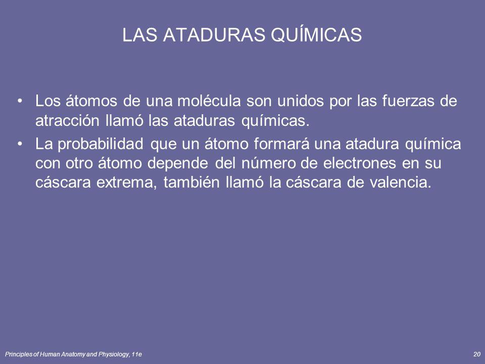 Principles of Human Anatomy and Physiology, 11e20 LAS ATADURAS QUÍMICAS Los átomos de una molécula son unidos por las fuerzas de atracción llamó las ataduras químicas.