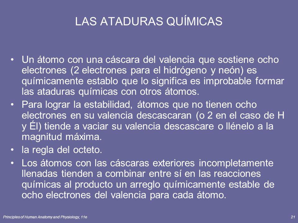 Principles of Human Anatomy and Physiology, 11e21 LAS ATADURAS QUÍMICAS Un átomo con una cáscara del valencia que sostiene ocho electrones (2 electrones para el hidrógeno y neón) es químicamente establo que lo significa es improbable formar las ataduras químicas con otros átomos.