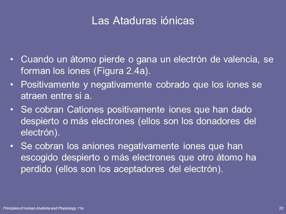 Principles of Human Anatomy and Physiology, 11e22 Las Ataduras iónicas Cuando un átomo pierde o gana un electrón de valencia, se forman los iones (Figura 2.4a).