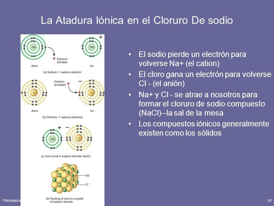 Principles of Human Anatomy and Physiology, 11e24 La Atadura Iónica en el Cloruro De sodio El sodio pierde un electrón para volverse Na+ (el cation) El cloro gana un electrón para volverse Cl - (el anión) Na+ y Cl - se atrae a nosotros para formar el cloruro de sodio compuesto (NaCl)--la sal de la mesa Los compuestos iónicos generalmente existen como los sólidos
