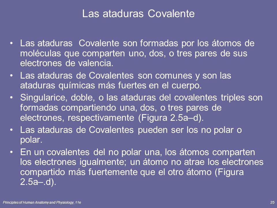 Principles of Human Anatomy and Physiology, 11e25 Las ataduras Covalente Las ataduras Covalente son formadas por los átomos de moléculas que comparten uno, dos, o tres pares de sus electrones de valencia.
