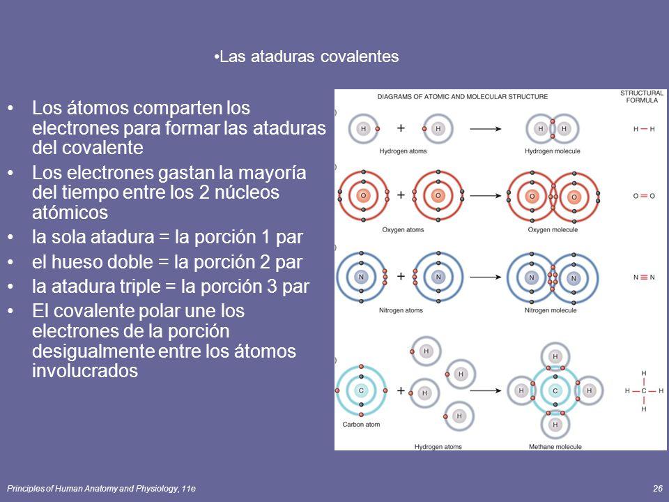 Principles of Human Anatomy and Physiology, 11e26 Los átomos comparten los electrones para formar las ataduras del covalente Los electrones gastan la mayoría del tiempo entre los 2 núcleos atómicos la sola atadura = la porción 1 par el hueso doble = la porción 2 par la atadura triple = la porción 3 par El covalente polar une los electrones de la porción desigualmente entre los átomos involucrados Las ataduras covalentes