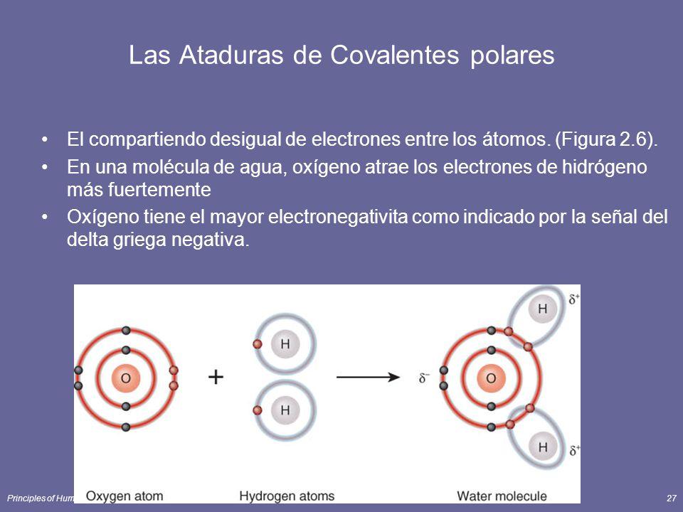 Principles of Human Anatomy and Physiology, 11e27 Las Ataduras de Covalentes polares El compartiendo desigual de electrones entre los átomos. (Figura
