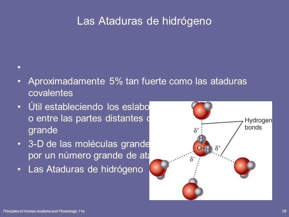 Principles of Human Anatomy and Physiology, 11e28 Las Ataduras de hidrógeno Aproximadamente 5% tan fuerte como las ataduras covalentes Útil estableciendo los eslabones entre las moléculas o entre las partes distantes de una molécula muy grande 3-D de las moléculas grandes se mantenidos unido por un número grande de ataduras de hidrógeno.