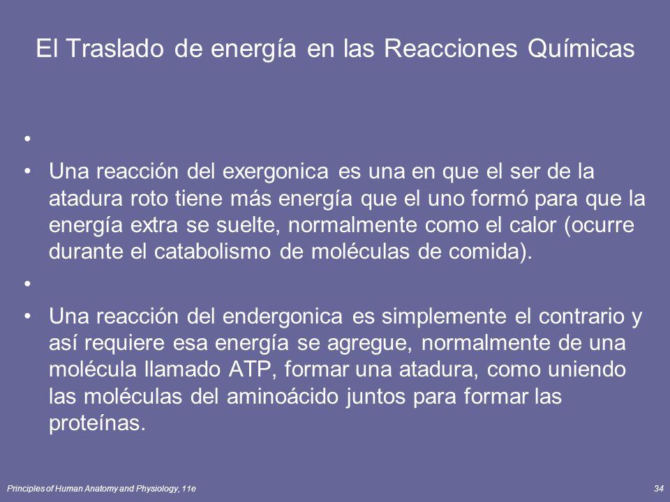 Principles of Human Anatomy and Physiology, 11e34 El Traslado de energía en las Reacciones Químicas Una reacción del exergonica es una en que el ser d