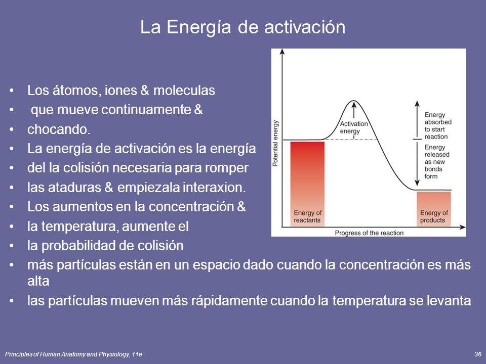 Principles of Human Anatomy and Physiology, 11e36 La Energía de activación Los átomos, iones & moleculas que mueve continuamente & chocando. La energí