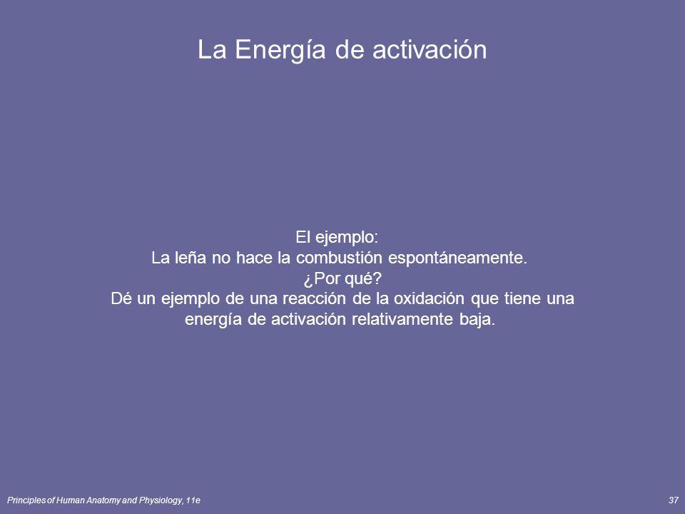 Principles of Human Anatomy and Physiology, 11e37 La Energía de activación El ejemplo: La leña no hace la combustión espontáneamente. ¿Por qué? Dé un