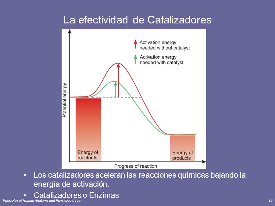 Principles of Human Anatomy and Physiology, 11e39 La efectividad de Catalizadores Los catalizadores aceleran las reacciones químicas bajando la energía de activación.