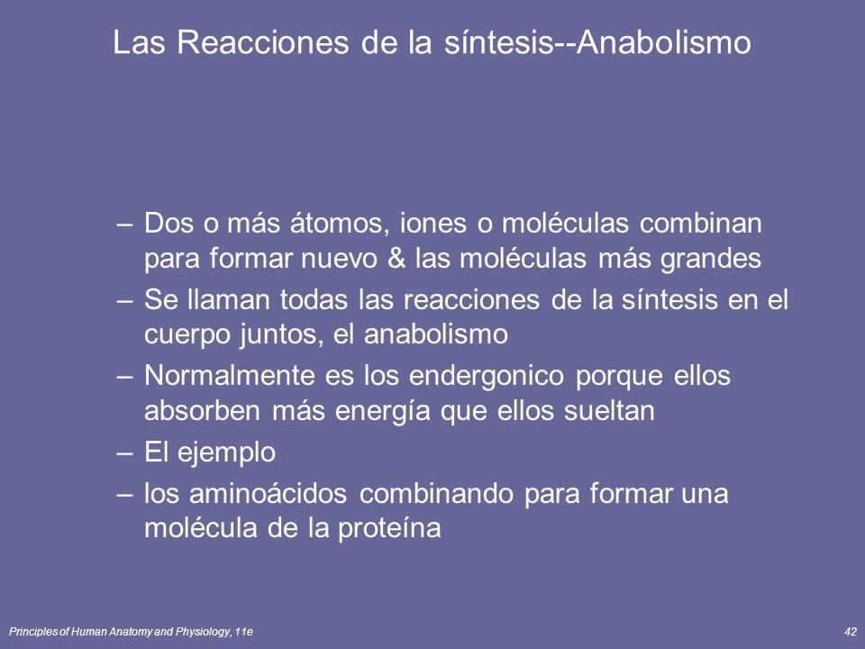 Principles of Human Anatomy and Physiology, 11e42 Las Reacciones de la síntesis--Anabolismo –Dos o más átomos, iones o moléculas combinan para formar nuevo & las moléculas más grandes –Se llaman todas las reacciones de la síntesis en el cuerpo juntos, el anabolismo –Normalmente es los endergonico porque ellos absorben más energía que ellos sueltan –El ejemplo –los aminoácidos combinando para formar una molécula de la proteína
