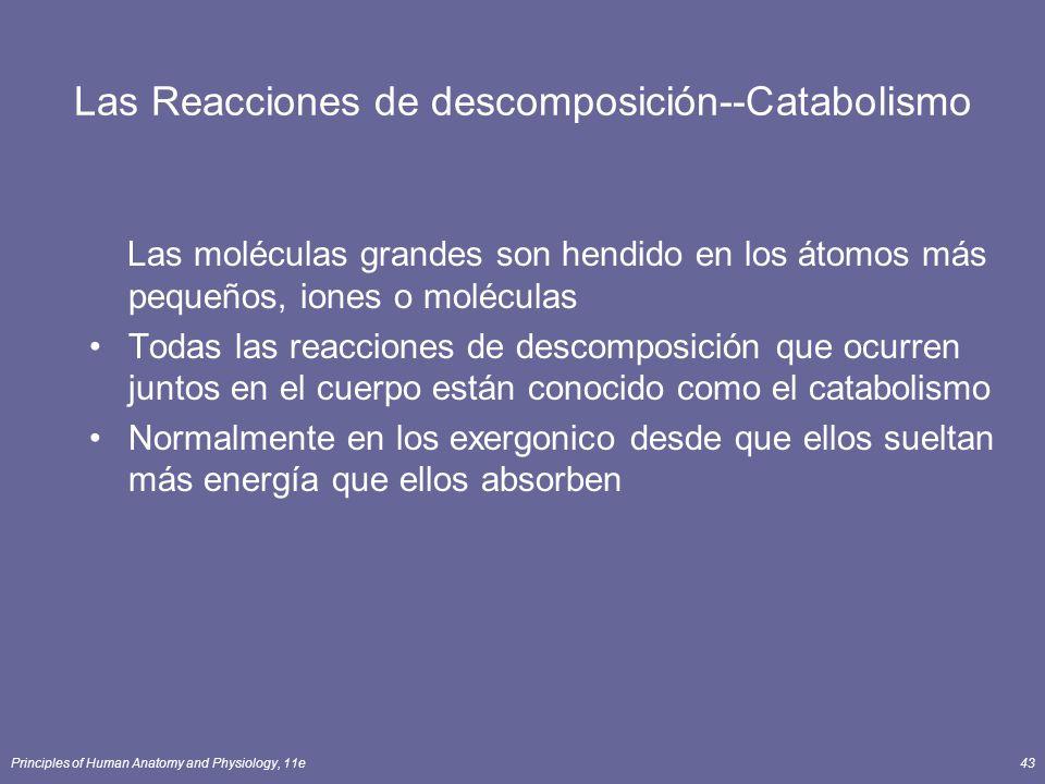 Principles of Human Anatomy and Physiology, 11e43 Las Reacciones de descomposición--Catabolismo Las moléculas grandes son hendido en los átomos más pequeños, iones o moléculas Todas las reacciones de descomposición que ocurren juntos en el cuerpo están conocido como el catabolismo Normalmente en los exergonico desde que ellos sueltan más energía que ellos absorben