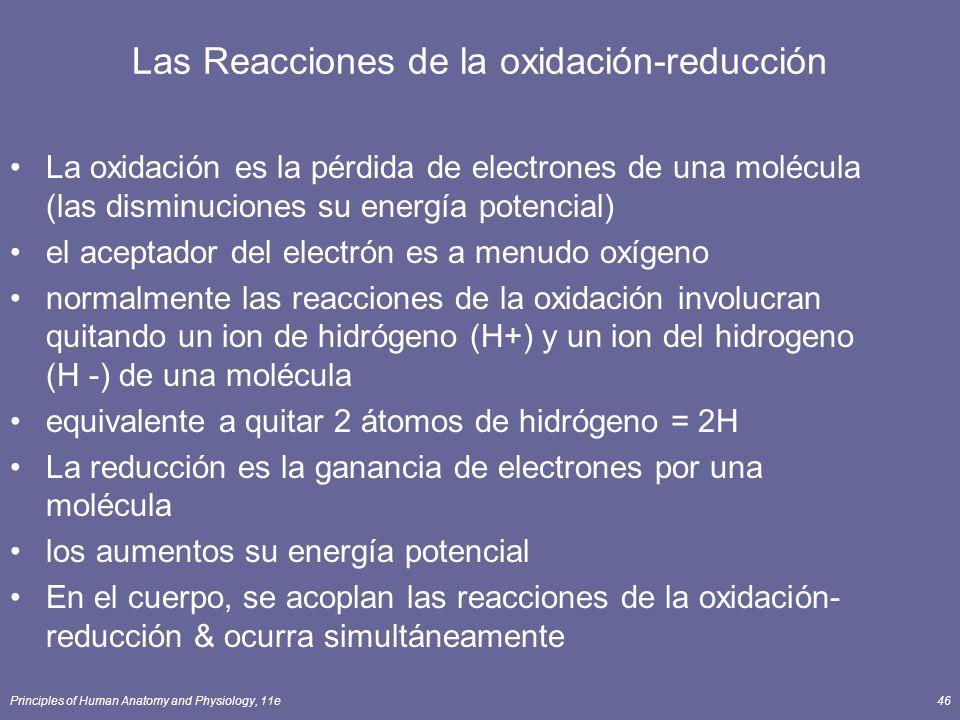 Principles of Human Anatomy and Physiology, 11e46 Las Reacciones de la oxidación-reducción La oxidación es la pérdida de electrones de una molécula (las disminuciones su energía potencial) el aceptador del electrón es a menudo oxígeno normalmente las reacciones de la oxidación involucran quitando un ion de hidrógeno (H+) y un ion del hidrogeno (H -) de una molécula equivalente a quitar 2 átomos de hidrógeno = 2H La reducción es la ganancia de electrones por una molécula los aumentos su energía potencial En el cuerpo, se acoplan las reacciones de la oxidación- reducción & ocurra simultáneamente