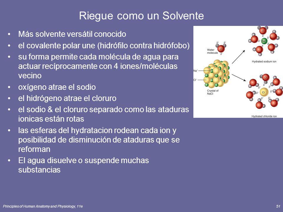 Principles of Human Anatomy and Physiology, 11e51 Riegue como un Solvente Más solvente versátil conocido el covalente polar une (hidrófilo contra hidrófobo) su forma permite cada molécula de agua para actuar recíprocamente con 4 iones/moléculas vecino oxígeno atrae el sodio el hidrógeno atrae el cloruro el sodio & el cloruro separado como las ataduras ionicas están rotas las esferas del hydratacion rodean cada ion y posibilidad de disminución de ataduras que se reforman El agua disuelve o suspende muchas substancias