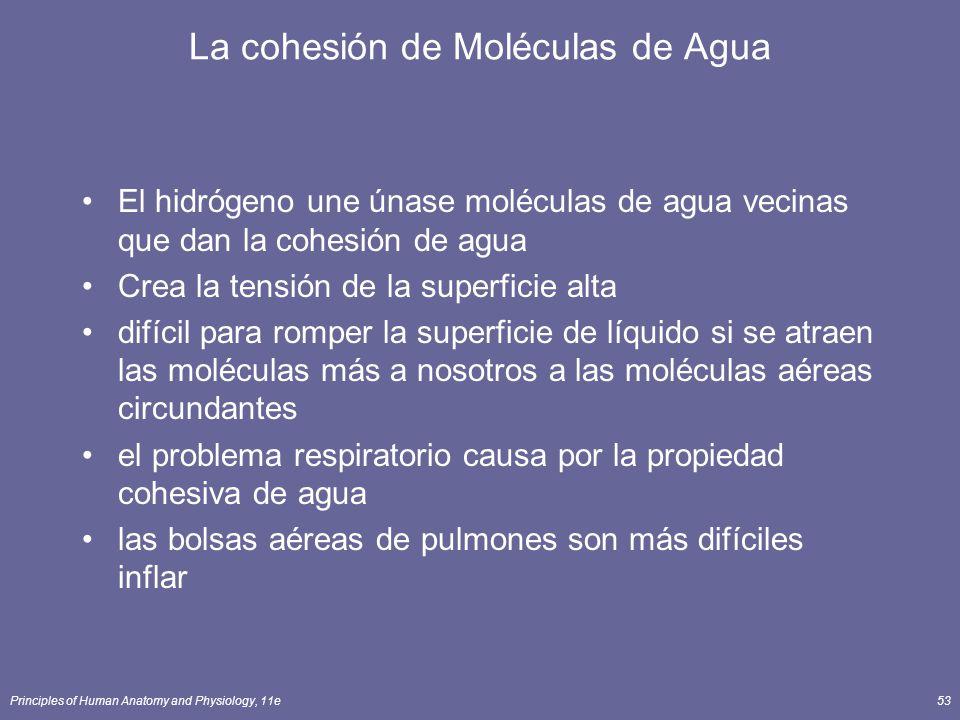 Principles of Human Anatomy and Physiology, 11e53 La cohesión de Moléculas de Agua El hidrógeno une únase moléculas de agua vecinas que dan la cohesió