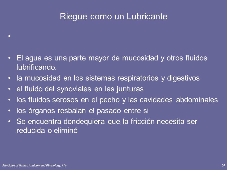 Principles of Human Anatomy and Physiology, 11e54 Riegue como un Lubricante El agua es una parte mayor de mucosidad y otros fluidos lubrificando.