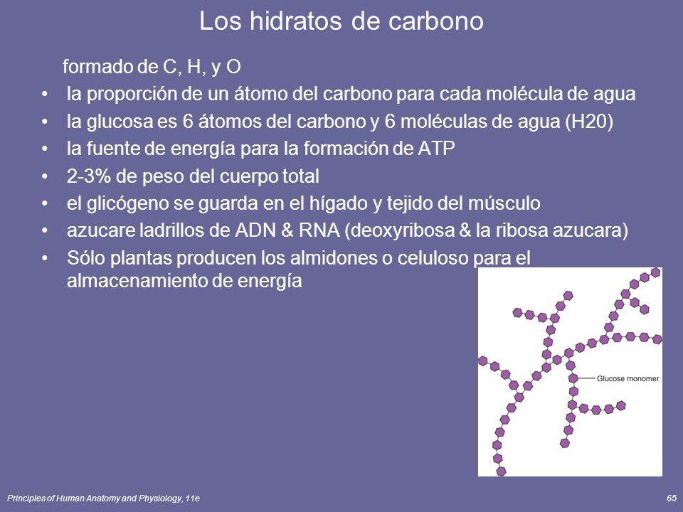 Principles of Human Anatomy and Physiology, 11e65 Los hidratos de carbono formado de C, H, y O la proporción de un átomo del carbono para cada molécula de agua la glucosa es 6 átomos del carbono y 6 moléculas de agua (H20) la fuente de energía para la formación de ATP 2-3% de peso del cuerpo total el glicógeno se guarda en el hígado y tejido del músculo azucare ladrillos de ADN & RNA (deoxyribosa & la ribosa azucara) Sólo plantas producen los almidones o celuloso para el almacenamiento de energía
