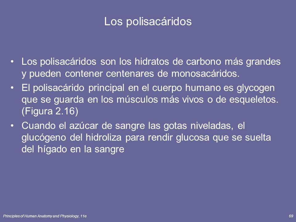 Principles of Human Anatomy and Physiology, 11e69 Los polisacáridos Los polisacáridos son los hidratos de carbono más grandes y pueden contener centenares de monosacáridos.