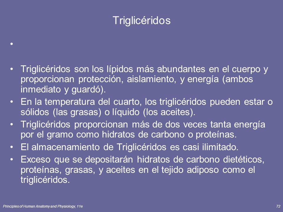 Principles of Human Anatomy and Physiology, 11e72 Triglicéridos Triglicéridos son los lípidos más abundantes en el cuerpo y proporcionan protección, aislamiento, y energía (ambos inmediato y guardó).