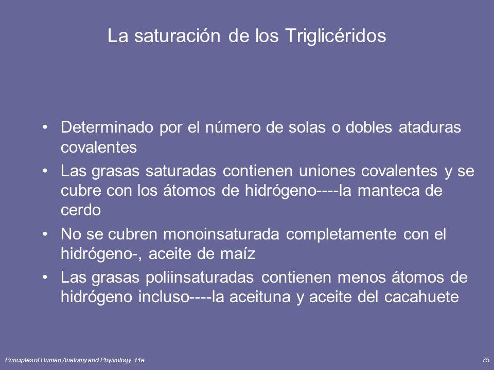 Principles of Human Anatomy and Physiology, 11e75 La saturación de los Triglicéridos Determinado por el número de solas o dobles ataduras covalentes L