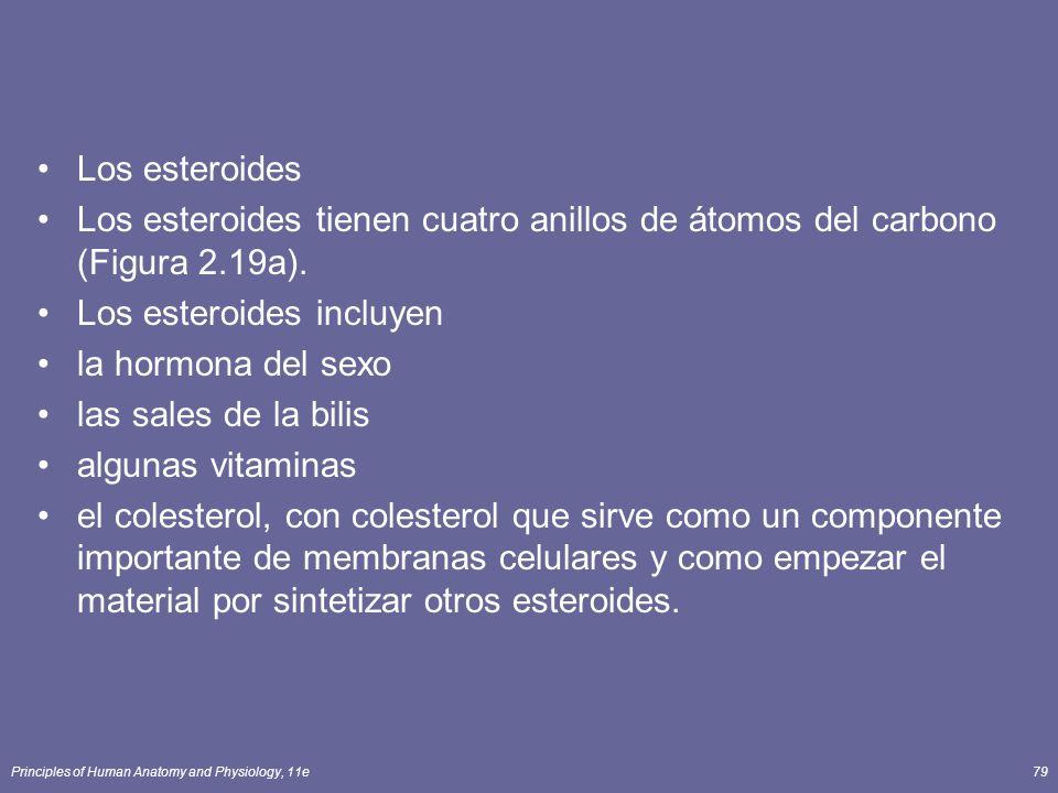 Principles of Human Anatomy and Physiology, 11e79 Los esteroides Los esteroides tienen cuatro anillos de átomos del carbono (Figura 2.19a). Los estero