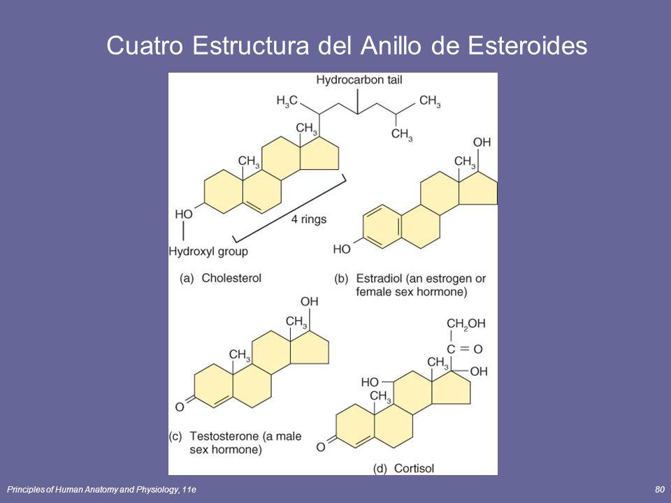 Principles of Human Anatomy and Physiology, 11e80 Cuatro Estructura del Anillo de Esteroides