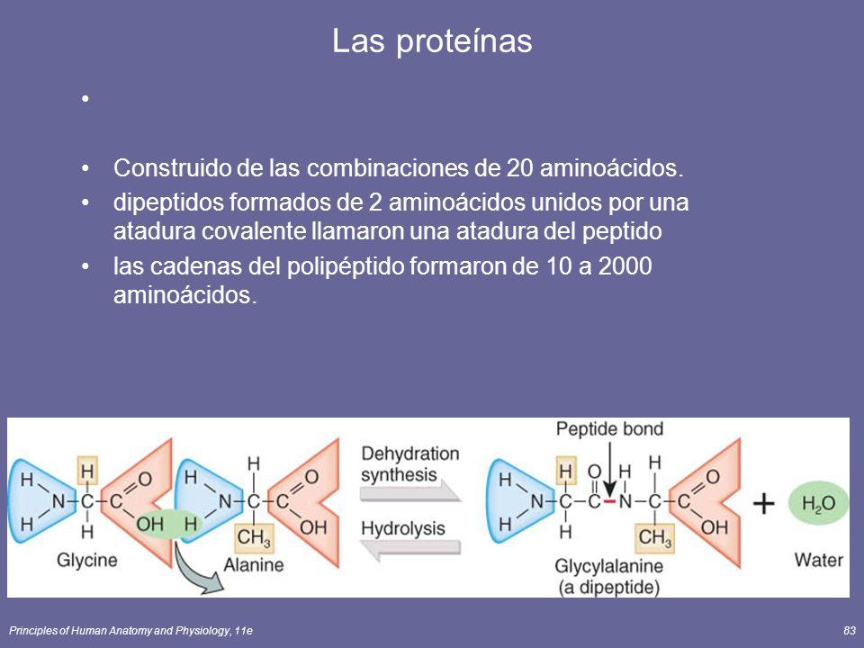 Principles of Human Anatomy and Physiology, 11e83 Las proteínas Construido de las combinaciones de 20 aminoácidos. dipeptidos formados de 2 aminoácido