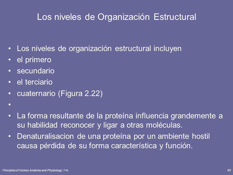 Principles of Human Anatomy and Physiology, 11e85 Los niveles de Organización Estructural Los niveles de organización estructural incluyen el primero