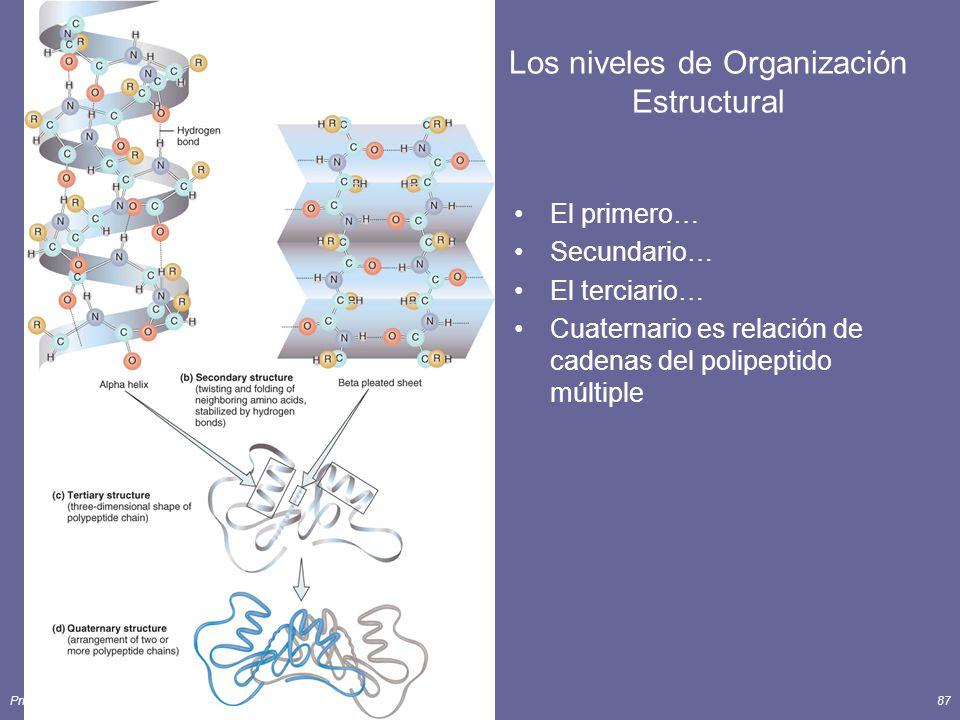 Principles of Human Anatomy and Physiology, 11e87 Los niveles de Organización Estructural El primero… Secundario… El terciario… Cuaternario es relación de cadenas del polipeptido múltiple