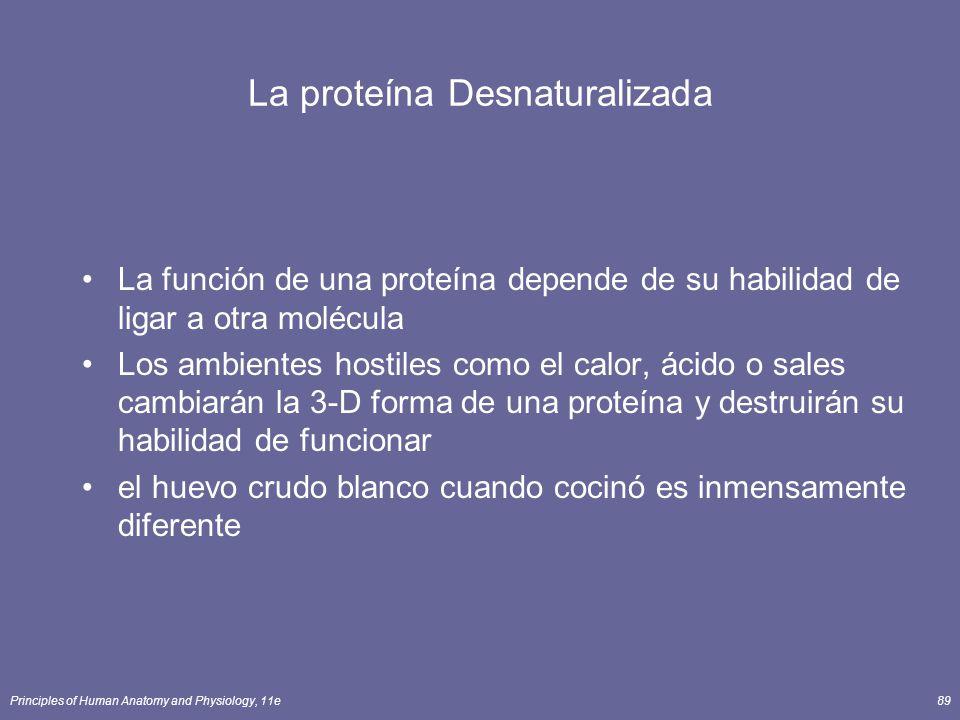 Principles of Human Anatomy and Physiology, 11e89 La proteína Desnaturalizada La función de una proteína depende de su habilidad de ligar a otra moléc