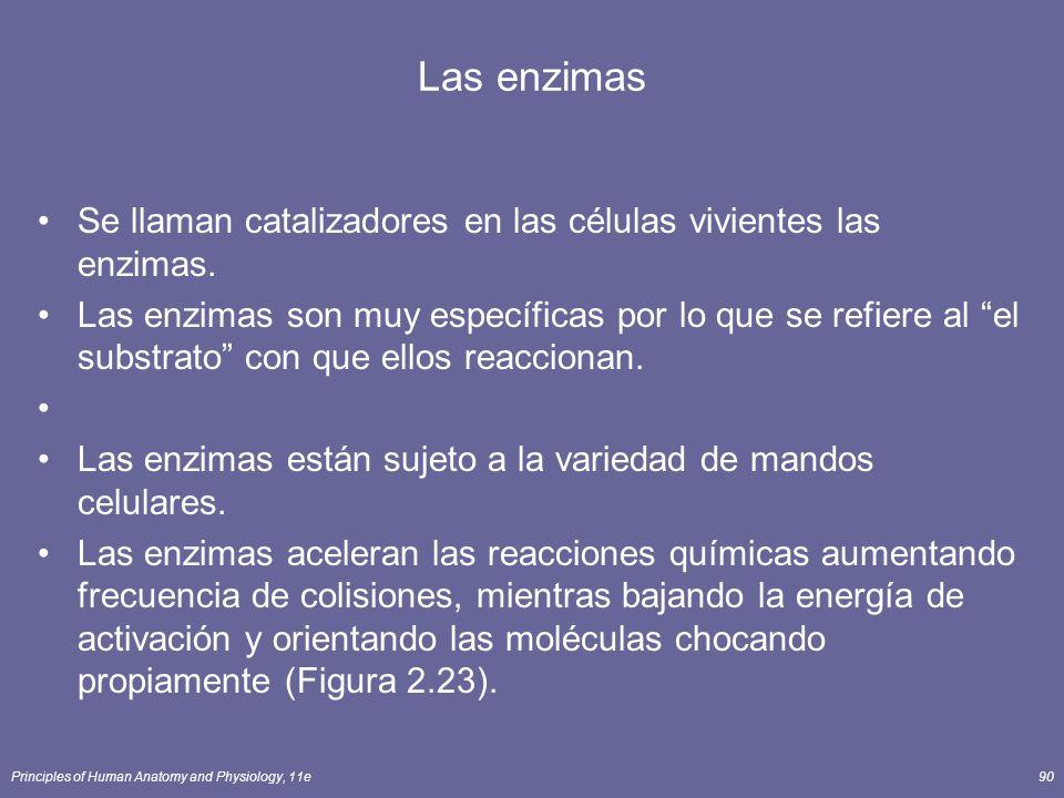 Principles of Human Anatomy and Physiology, 11e90 Las enzimas Se llaman catalizadores en las células vivientes las enzimas. Las enzimas son muy especí
