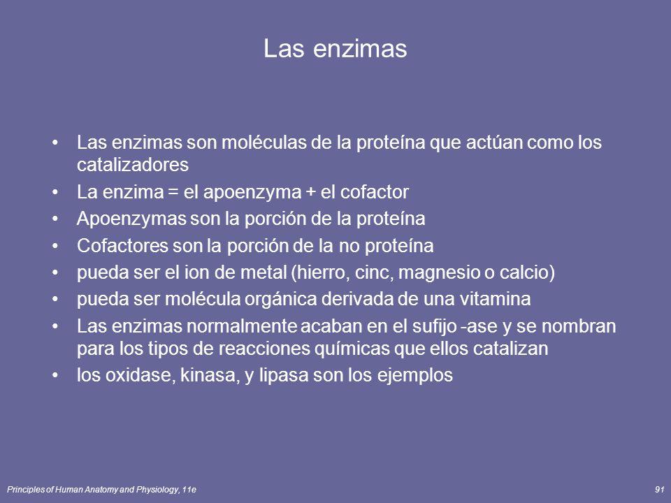 Principles of Human Anatomy and Physiology, 11e91 Las enzimas Las enzimas son moléculas de la proteína que actúan como los catalizadores La enzima = e