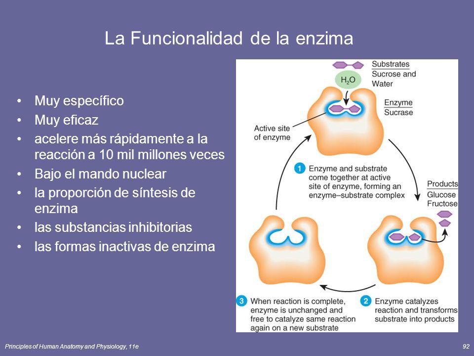 Principles of Human Anatomy and Physiology, 11e92 La Funcionalidad de la enzima Muy específico Muy eficaz acelere más rápidamente a la reacción a 10 mil millones veces Bajo el mando nuclear la proporción de síntesis de enzima las substancias inhibitorias las formas inactivas de enzima