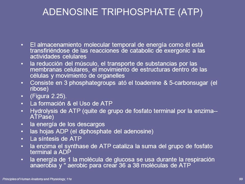 Principles of Human Anatomy and Physiology, 11e99 ADENOSINE TRIPHOSPHATE (ATP) El almacenamiento molecular temporal de energía como él está transfiriéndose de las reacciones de catabolic de exergonic a las actividades celulares la reducción del músculo, el transporte de substancias por las membranas celulares, el movimiento de estructuras dentro de las células y movimiento de organelles Consiste en 3 phosphategroups ató el toadenine & 5-carbonsugar (el ribose) (Figura 2.25).